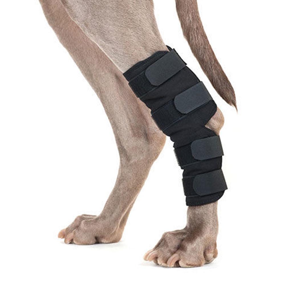 Back on Track Dog Hock Brace