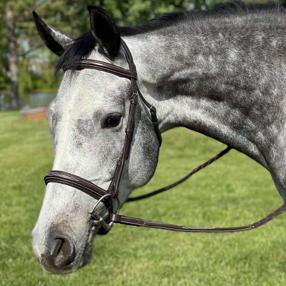 Brighton Fancy Stitched Square Raised Padded Bridle