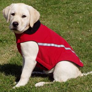 RC West Coast Dog Coat