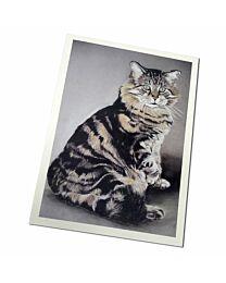 """Costa Classics """"Cat"""" Cards"""
