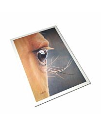 """Costa Classics """"Eye of the Beholder"""" Cards"""
