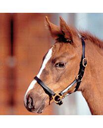 Waldhausen Leather Foal Halter