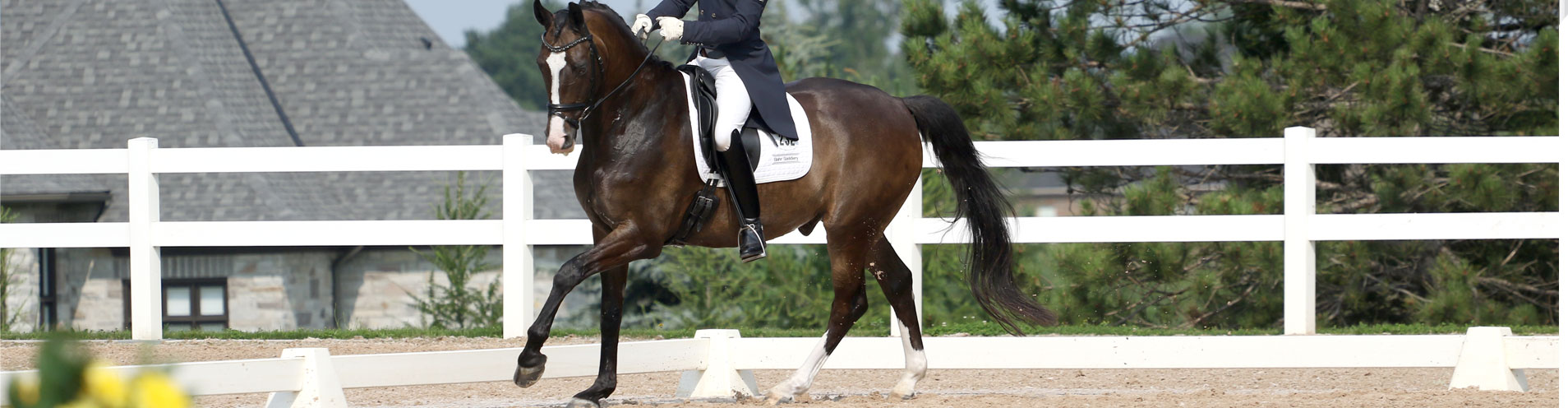 Saddle Fitting Services | Professional Saddle Fitting | Bahr